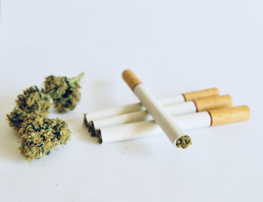 Four loose Rasti hemp cigarettes next to dried hemp buds